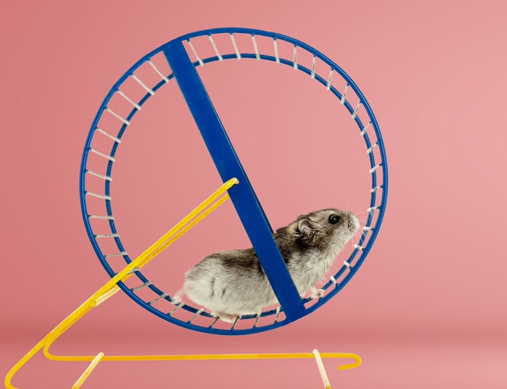 hamster wheel cropped 1K px